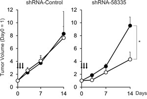 Therapeutic effect of shRNA-58335
