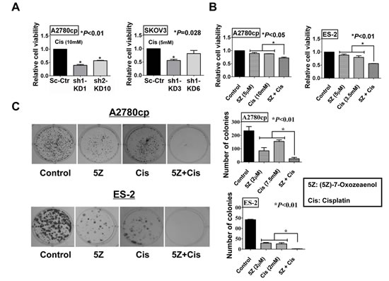 Inhibition of TAK1 sensitizes ovarian cancer cells to cisplatin-induced cell apoptosis.