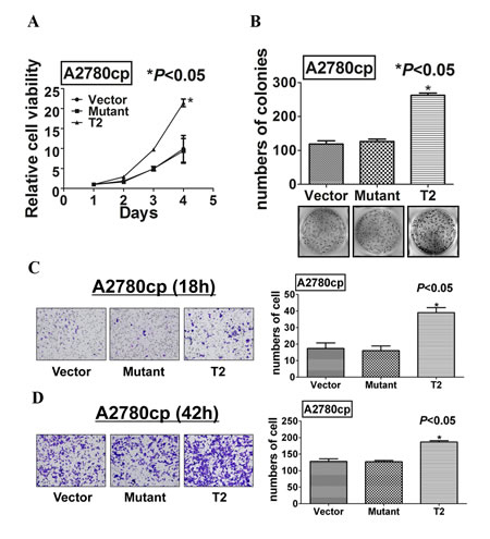Mutation at Ser412 of TAK1 completely abrogates its function in ovarian cancer aggressiveness.