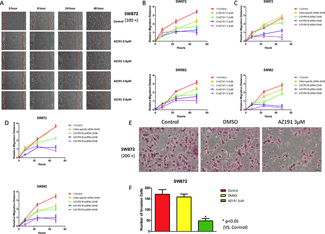 Inhibition of DYRK1B by kinase inhibitor AZ191 or RNAi impairs motility in liposarcoma cell lines.
