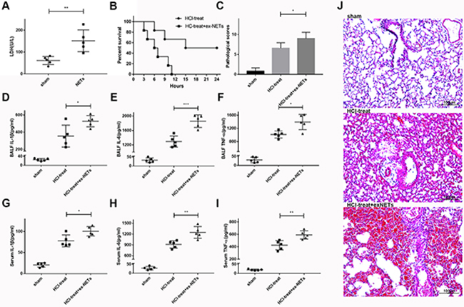 Exogenous NETs aggravated lung damage and inflammation in mice with ARDS.