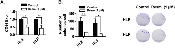 Resminostat decreases CD44 expression and the stemness capacity of HCC cells.