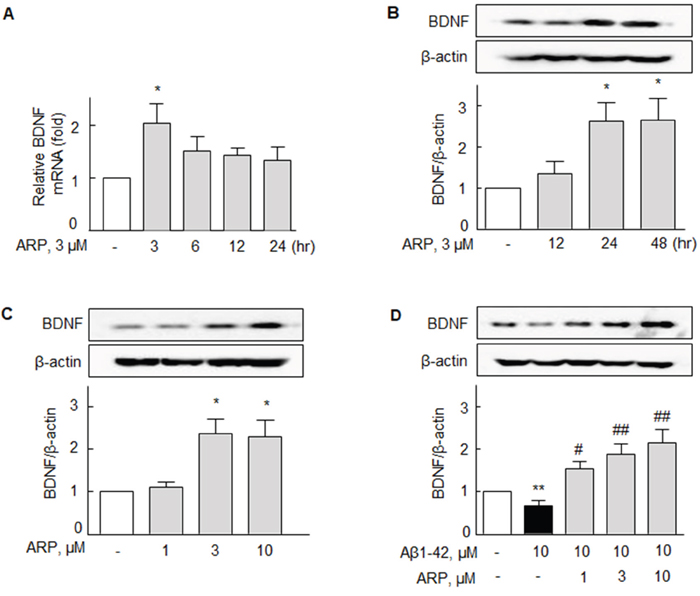 Aripiprazole-stimulated increase in BDNF mRNA and protein expression in N2a cells.