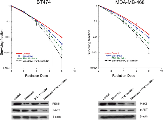 Effect of Simeprevir on radiosensitizing effect of PD-L1 blockade in BT474 and MDA-MB-468 cells.