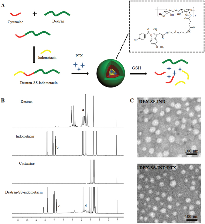 Preparation and characterization of DEX-SS-IND/PTX micelles.