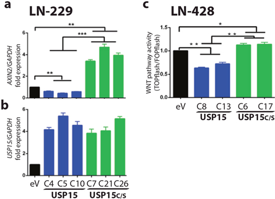 USP15 exerts an inhibitory effect on WNT pathway activity in GBM cell lines.