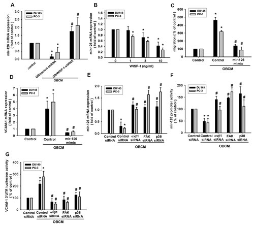 Fig.5: Osteoblast-derived WISP-1 boosts PCa migration and VCAM-1 expression by down-regulating miR-126 expression.