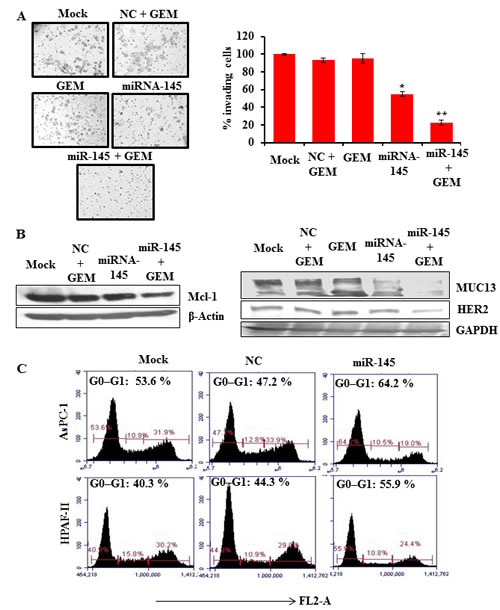 Fig.4: miR-145 increases gemcitabine sensitivity in PanCa cells.