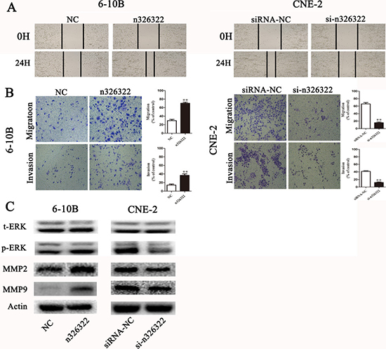 lncRNA-n326322 promotes NPC cell invasion and migration.
