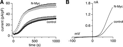 Endogenous MagNuM currents are increased by N-Myc upregulation.