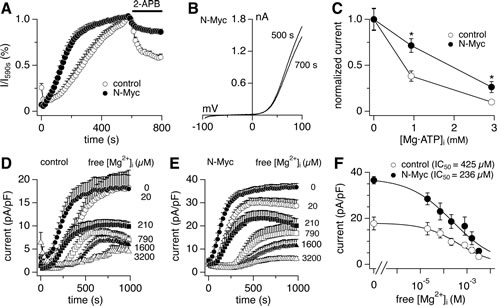 N-Myc expression shapes the phenotype of native TRPM7/TRPM6 currents.