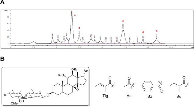 Preparation and chemical analysis of FR5.