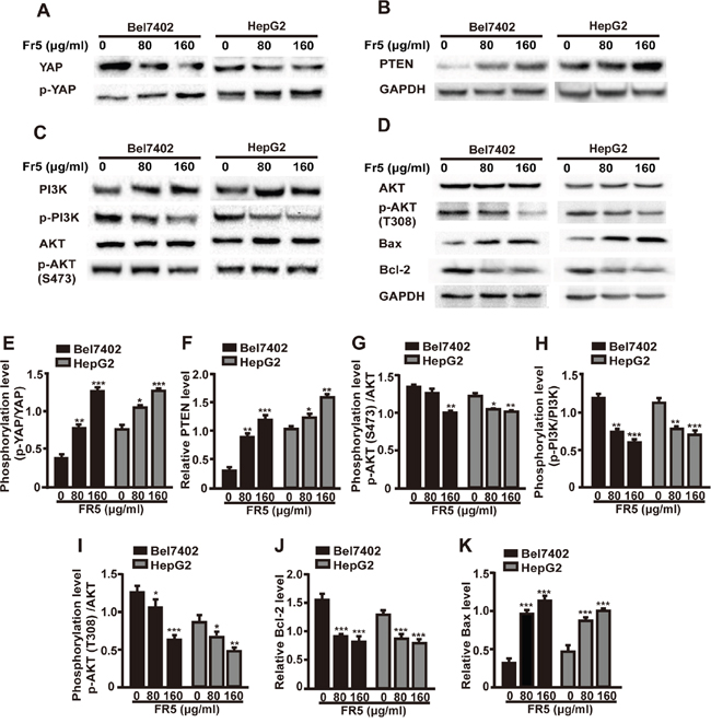 FR5 suppresses Hippo-YAP and PTEN/PI3K/AKT pathways in Bel7402 and HepG2 cells.