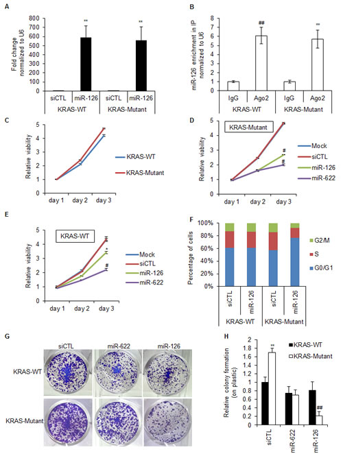 Over-expression of miR-126 increases the G1 compartment in KRAS-Mutant cells.