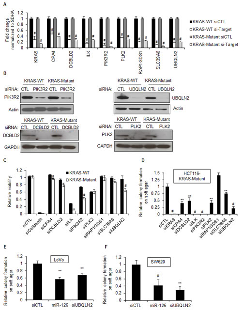 Silencing select miR-126 target genes in KRAS-Mutant cells inhibits clonogenicity.
