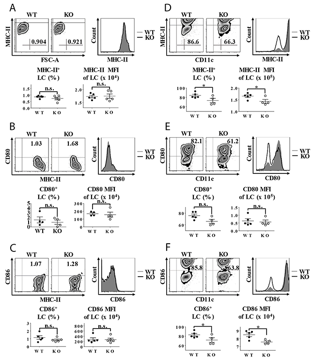 Impaired LC maturation in TIEG1 knockout mice.