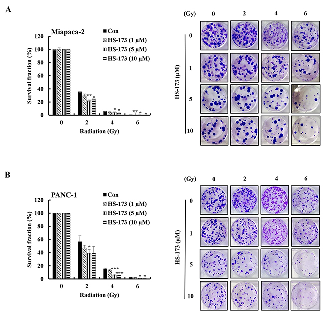 HS-173 significantly radiosensitizes pancreatic cancer cells.