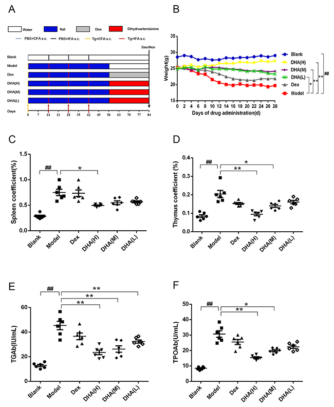 Effect of DHA on a C57BL/6J EAT mouse model.