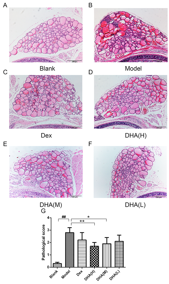 Histopathological changes in the thyroid gland of mice in experimental groups.