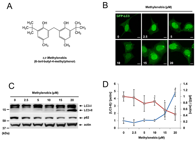 Methylenebis regulates autophagy.