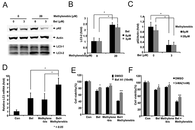 Regulation of autophagy by methylenebis and belotecan.