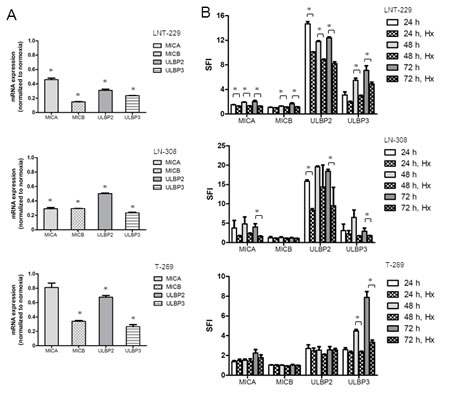 Fig.5: Hypoxia reduces NKG2DL expression on glioma cells in a miRNA-independent manner.