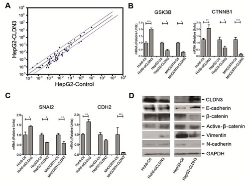 Fig.6: CLDN3 inactivates Wnt-EMT signaling in HCC cells.