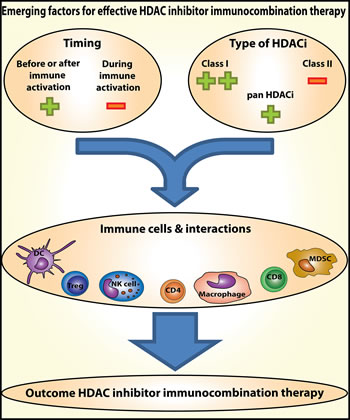Emerging factors for effective HDAC inhibitor immunocombination therapy.