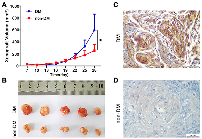 High glucose promotes tumour growth of TSCC in vivo.