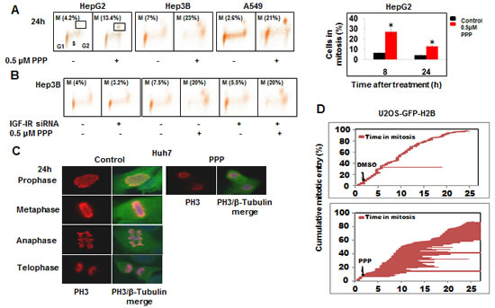PPP induced mitotic arrest in pro-metaphase.