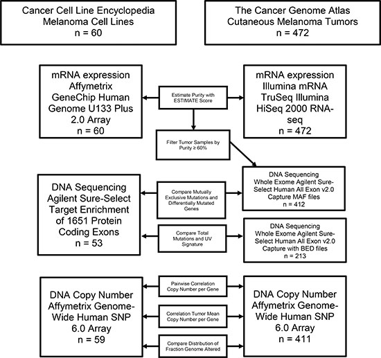 Flow chart outlining the analysis pipeline and samples included in each comparison.