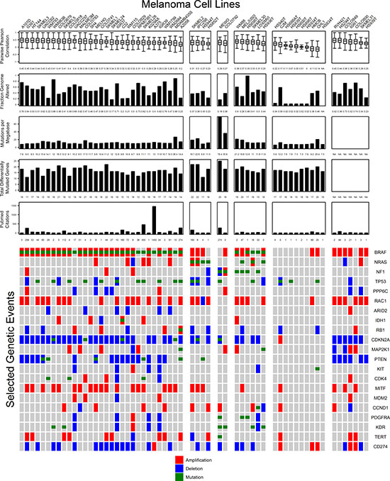 Important genomic features of melanoma cell lines relative to tumor samples are summarized with representative figures of comparisons to tumors.