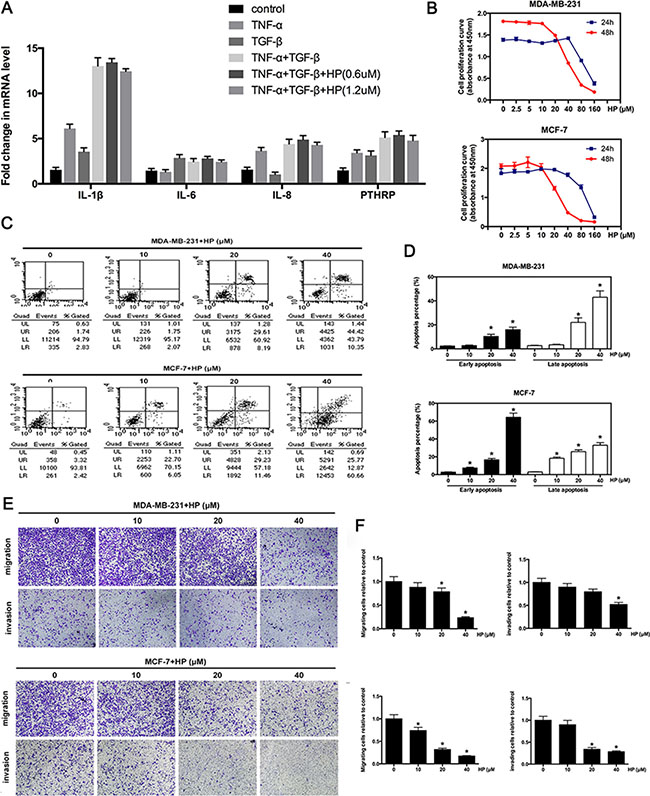 Hypericin inhibits the expression of osteoclast-activating factors and suppresses the invasion and migration