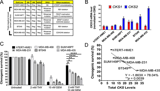 CKS expression levels in triple negative breast cancer cell lines correlate with gemcitabine sensitivity under replication stress.