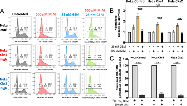 Entry into S-phase is required for gemcitabine incorporation and gemcitabine-induced apoptosis.
