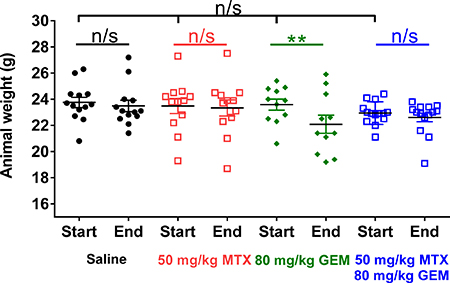 Methotrexate treatment prevents gemcitabine-induced weight loss in mice.