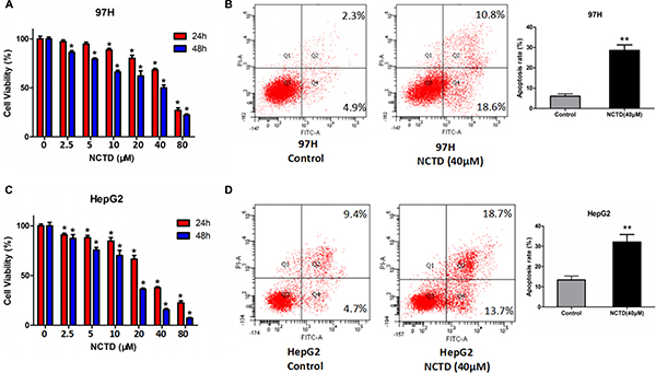 NCTD suppresses cell viability and promotes apoptosis in HCC cell lines.