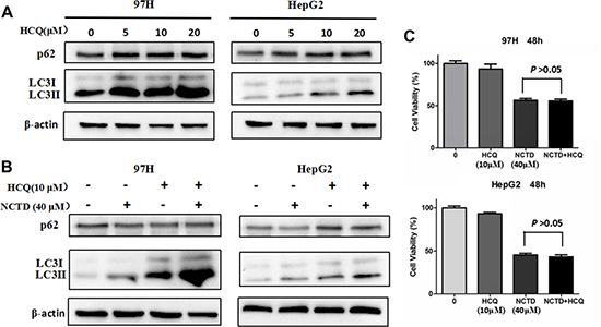 Inhibition of autophagy does not mitigate the cytotoxic effect of NCTD.