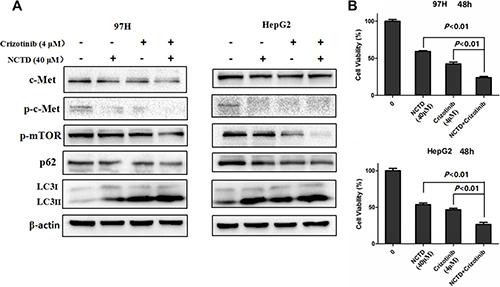Crizotinib enhances NCTD cytotoxicity.