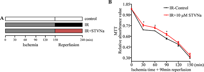 Effect of IR on H9c2 cell viability and the protective effect of STVNa in different ischemia conditions.