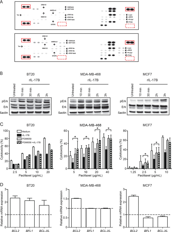 IL-17B-induced resistance to paclitaxel is mediated by activation of the ERK pathway.