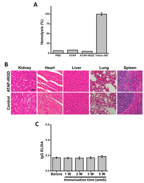 ATAP-iRGD has low immunogenicity in mouse model with minimum effect on hemolysis.