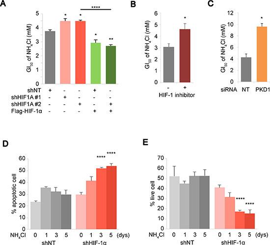 HIF expression level mediates cellular response towards survival under ammonia stress.