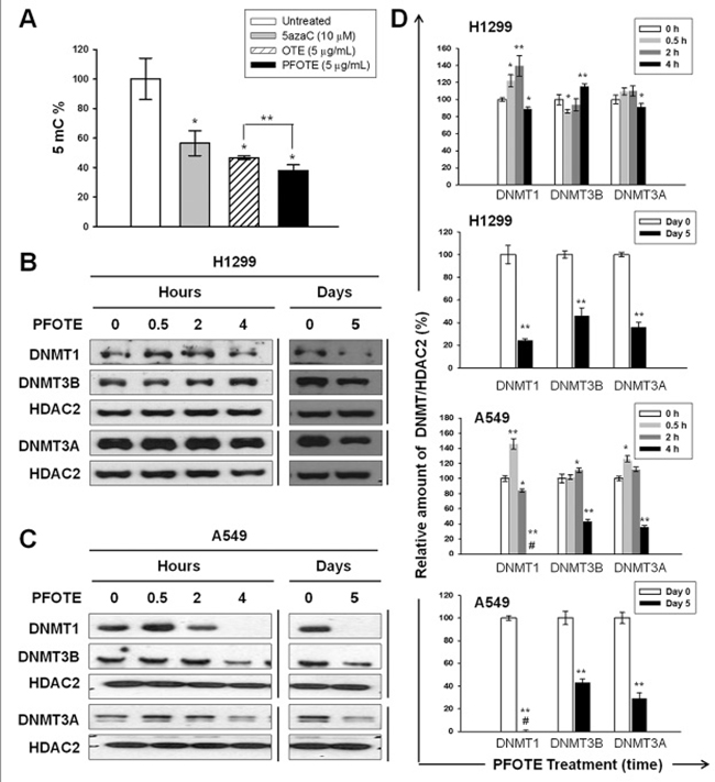 PFOTE changes the genomic 5mC content and nuclear accumulation of DNMTs in lung cancer cells lines.