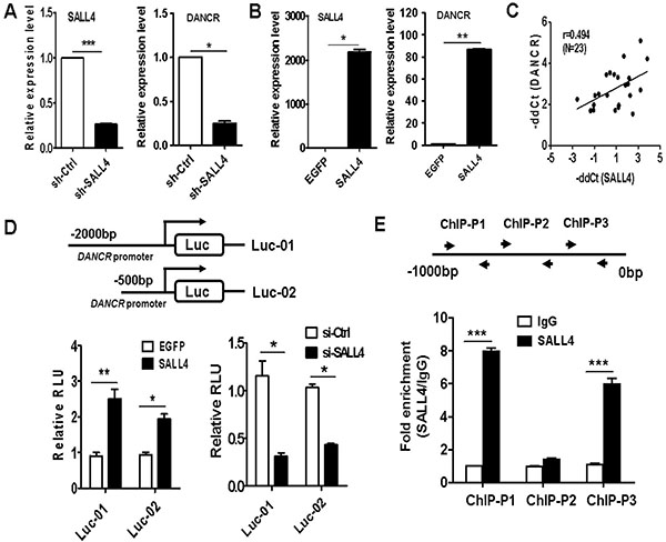 DANCR is activated by SALL4 in gastric cancer cells.