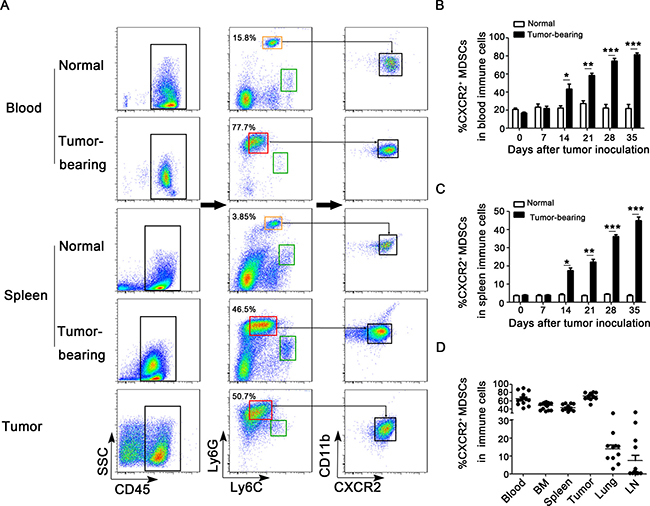 CXCR2+ MDSCs are predominately expanded and recruited during breast cancer progression.