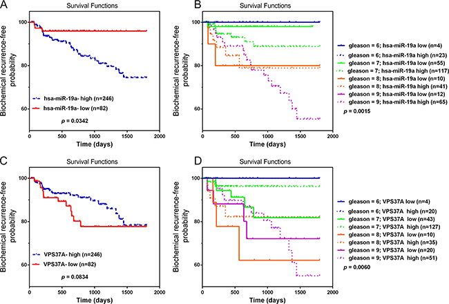 Overexpression of miR-19a and downregulation of VPS37A predict poor prognosis in PCa.