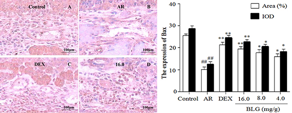 Effects of BLG on the expression of Bax in guinea pig nasal mucosa.