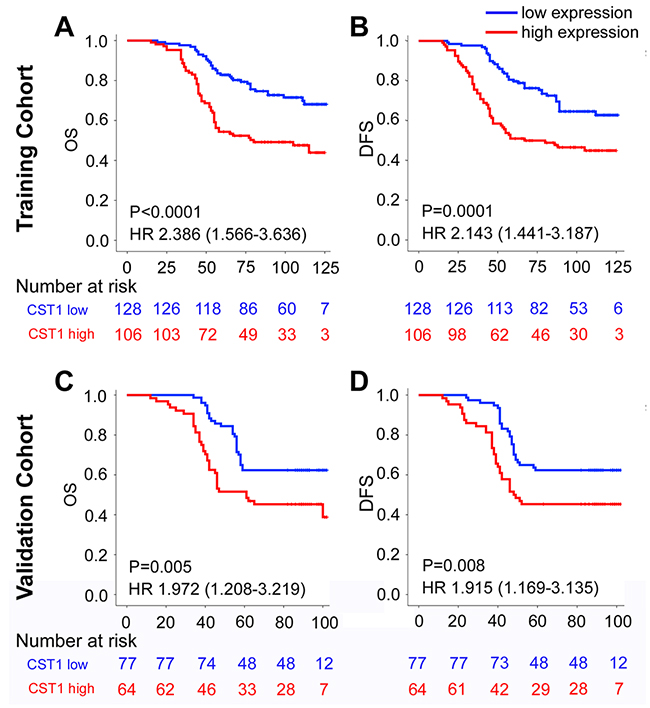 Kaplan-Meier survival analysis of overall survival and disease-free survival according to CST1 expression status of CRC patients in the training cohort and validation cohort.