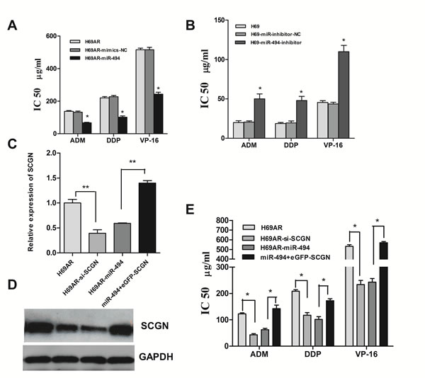 Modulation of chemoresistance by SCGN is partly mediated under miR-494.